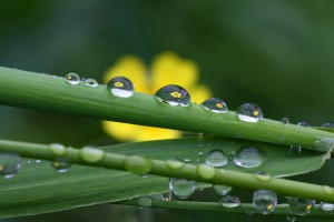 Water Drops Reflection